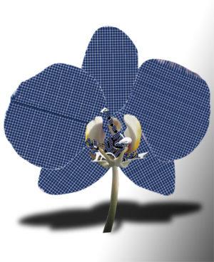 Orchidea Genesi Fotovoltaico