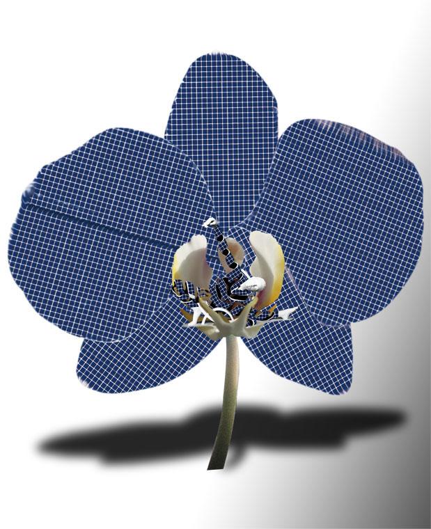 Orchidee Genesis Photovoltaik